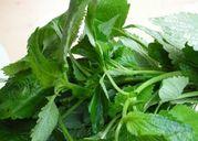 Rau kinh giới, loại thảo dược tuyệt vời cho mọi nhà