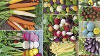 Con người bị ảnh hưởng gì khi sử dụng thực phẩm biến đổi gene?