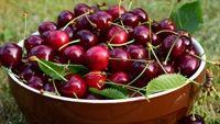 Vì sao bạn nên ăn nhiều một chút quả cherry?