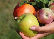 Loại bỏ thuốc trừ sâu trên vỏ táo để tận hưởng trọn vẹn hương vị