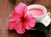 Hoa dâm bụt không chỉ đỏ và thơm mà còn chữa sỏi thận hiệu quả