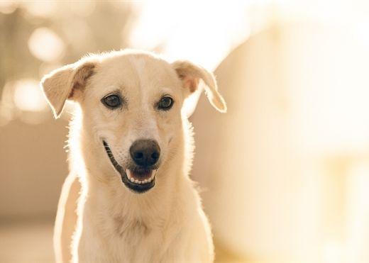 Nuôi chó giúp giảm nguy cơ mắc bệnh tim mạch và trầm cảm