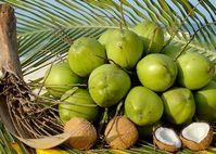 Nước dừa: Bí quyết cho da xinh dáng đẹp và sức khỏe toàn diện