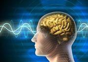 Thực phẩm gây tổn thương não cần phải tránh