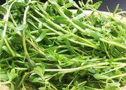 5 loại rau quê thường thấy có thể trở thành những bài thuốc quý