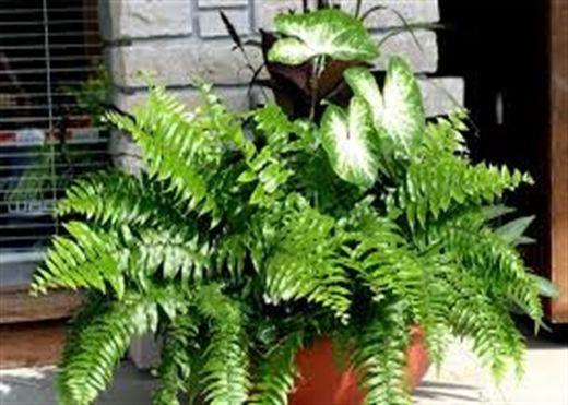 10 loại cây cảnh đặt trong nhà giúp lọc không khí mùa nắng nóng