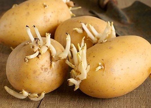 Những loại thực phẩm chứa độc tố mà bạn nên cẩn trọng khi chế biến