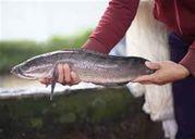 6 loài cá nước ngọt cực kỳ tốt cho sức khỏe
