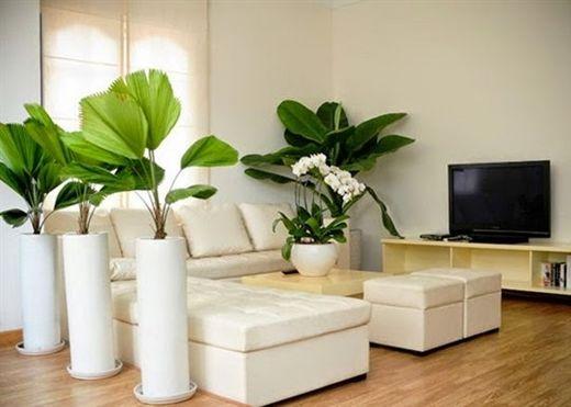 Những loại cây trồng trong nhà khử mùi thuốc lá cực hiệu quả