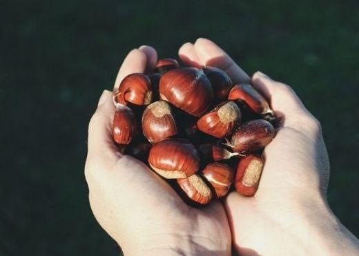Đã vào mùa nhâm nhi hạt dẻ nhưng ít ai biết hết lợi ích tuyệt vời của loại hạt này