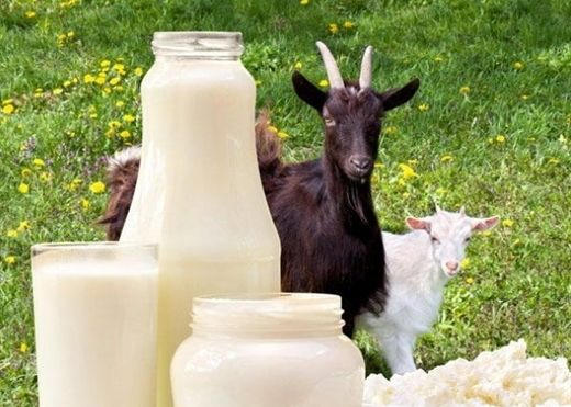 Đây là lý do vì sao sữa dê được tiêu thụ phổ biến trên toàn thế giới