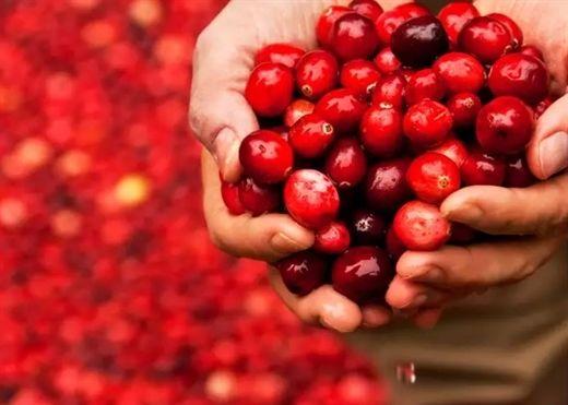 Đẩy lùi gan nhiễm mỡ với loại quả có hương vị ngọt ngào này