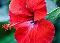 Những cánh hoa mong manh giúp bạn cải thiện nhan sắc rõ rệt
