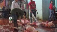 Sốc: Phía trong những lò giết mổ