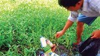 Tiết lộ gây sốc về công nghệ trồng rau siêu bẩn