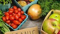 Lựa chọn rau hữu cơ đúng chuẩn