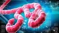 Những dịch bệnh khiến cả thế giới khiếp sợ