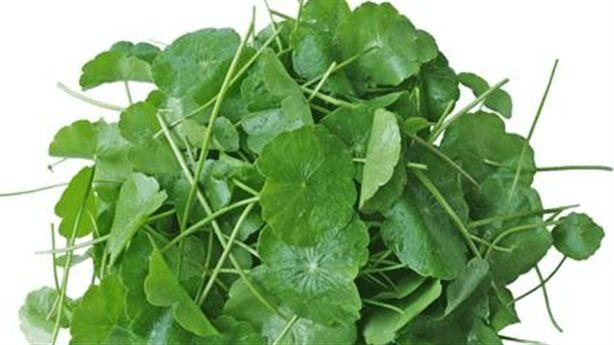 Hạ sốt hiệu quả bằng cây nhọ nồi, rau má và rau dấp cá...