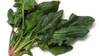Những món ăn, bài thuốc tuyệt hay từ cải bó xôi