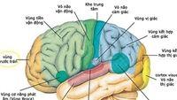 Những điều thú vị về bộ não của chúng ta