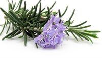 Ngửi những mùi hương này sẽ giúp bạn yêu đời hơn