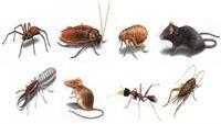 Để ngôi nhà sạch bóng côn trùng