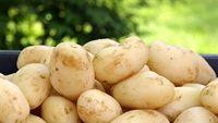 Những loại rau quả làm tăng kích thước vòng eo
