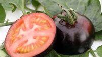 Cẩn thận với cà chua đen