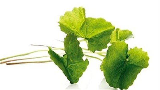 Ăn 2 lá rau má mỗi ngày để tránh xa tuổi già