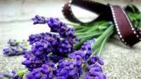 """""""Tận diệt"""" côn trùng bằng hoa, thảo mộc"""