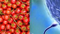 Lợi ích bất ngờ của cà chua trong điều trị vô sinh ở nam giới