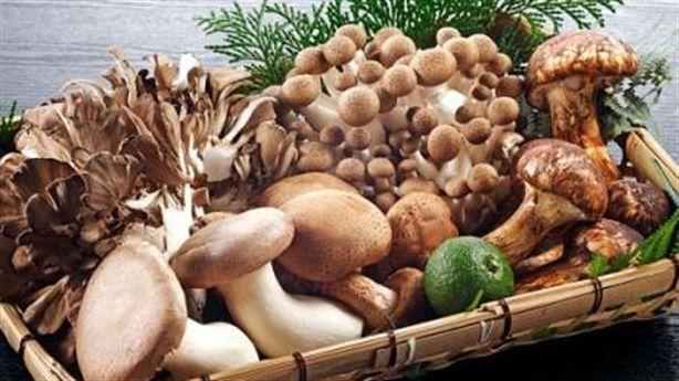 Ăn NẤM mang lại nhiều lợi ích cho sức khỏe, giảm cân và sự trẻ đẹp