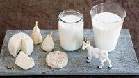 Sữa dê - sự thay thế hoàn hảo