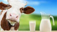 Ai cần tránh sữa bò?