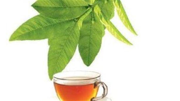 Uống trà lá ổi để trị ít nhất 5 loại bệnh