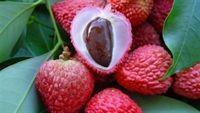 Những thực phẩm càng ăn càng nóng nên tránh vào mùa hè