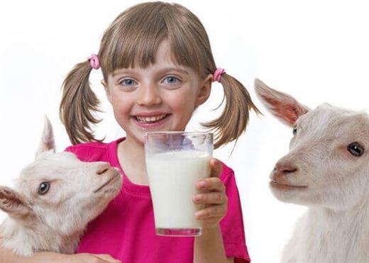 10 lợi ích không ngờ của sữa dê