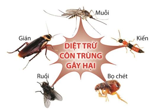 7 mẹo diệt sạch côn trùng trong nhà bạn