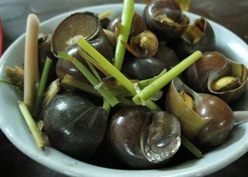 Ốc nhồi- món ăn khoái khẩu, có tác dụng chữa nhiều bệnh