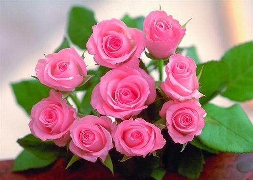 13 lợi ích bất ngờ của hoa hồng mà không phải ai cũng biết đến