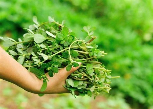 9 loại rau tưởng chừng chỉ dùng nấu canh nhưng lại có tác dụng trị mụn 'thần kỳ'