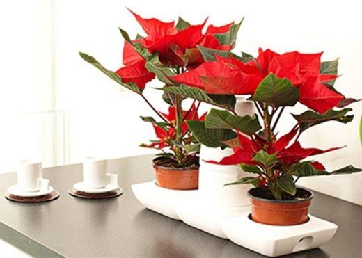 Bày các loại hoa rước tài lộc này ở phòng khách, gia chủ lên như diều gặp gió
