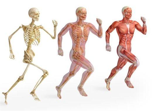6 bài tập giúp cơ thể khỏe mạnh, kéo dài tuổi thọ