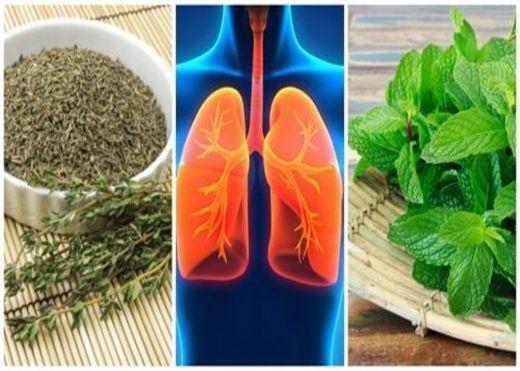 Dùng ngay 8 loại thảo mộc tự nhiên này nếu muốn có một lá phổi khỏe mạnh