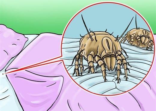 Những phát hiện giật mình lý giải vì sao không nên dọn giường ngay khi thức dậy