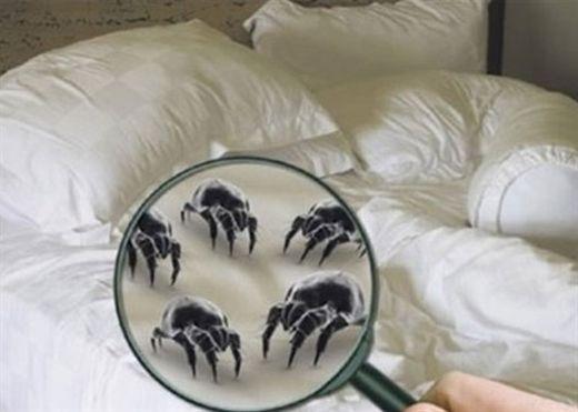 Đừng để chiếc giường êm ái hàng đêm trở thành nơi trú ngụ lý tưởng của mạt bụi - vi sinh vật gây viêm đường hô hấp