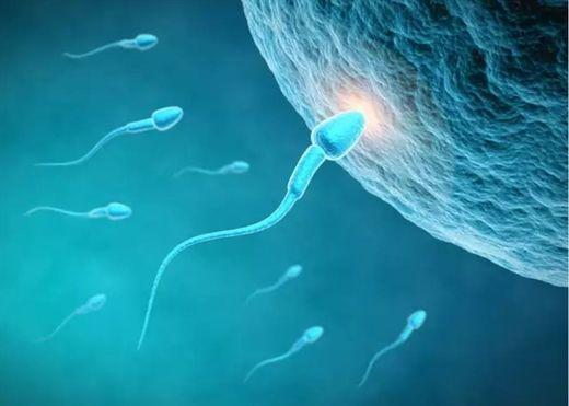 Nghiên cứu mới: Covid-19 gây tổn thương tinh trùng, dẫn đến vô sinh ở nam giới