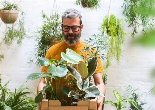 Trồng vài chậu cây xanh trong nhà để thanh lọc không khí, thông tin này chắc chắn khiến nhiều người ngã ngửa