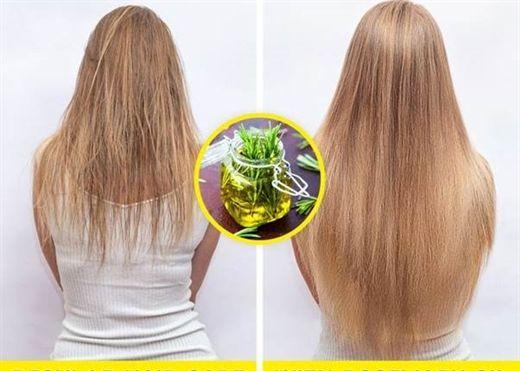 Lo lắng vì tóc gãy rụng liên tục, bỏ túi ngay 8 loại thảo dược tự nhiên giúp kích thích mọc tóc, đem lại cho bạn mái tóc óng ả, khỏe mạnh