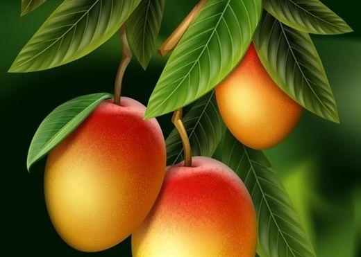 Quả xoài ngon và giàu vitamin nhưng ít ai biết rằng, lá xoài cũng nhiều đặc tính giúp kiểm soát tiểu đường, giảm huyết áp…